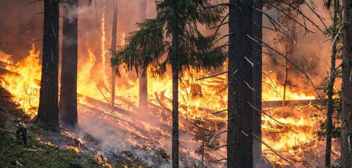 Waldbrandgefahr – Verordnung