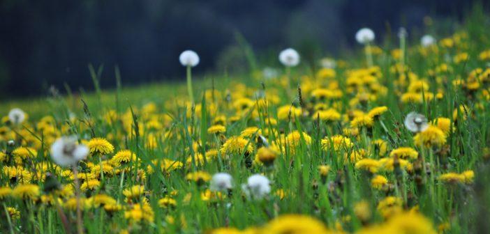 Vielen Dank für die Teilnahme am Fotowettbewerb: Blumenwiesen